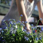 Zakładanie ogrodów Kraków - cennik 2020